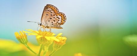efecte papallona